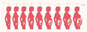 largo normal cuello utero embarazo